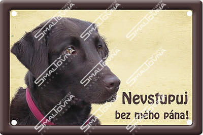 Flat coated retriever II